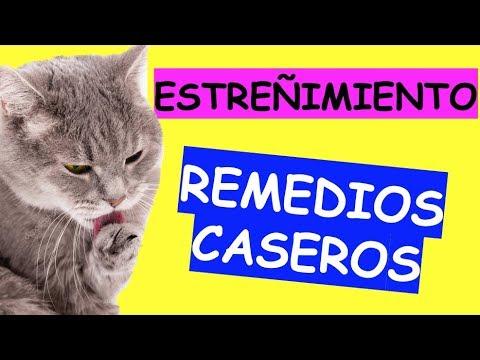 Como Curar El Estreñimiento En Gatos Youtube