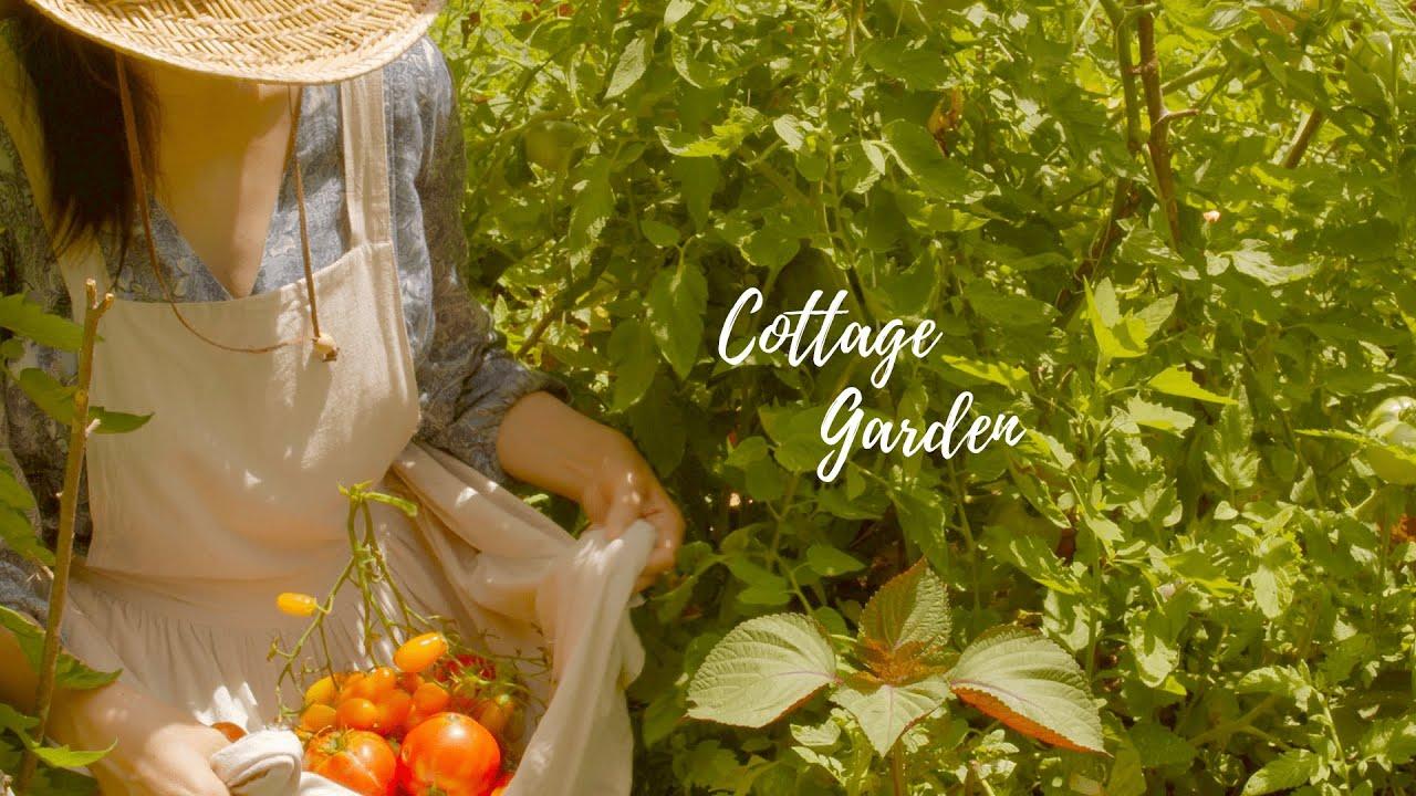 トマト畑がジャングル化しました🍅森の食堂オープン🌿にわとり飼育と猫と犬