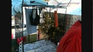 Bats - Gold Coast Animal Pet Show 08/2011 - Bat / Flying Fox