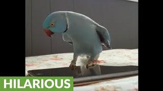 Parrot delivers epic dance moves for the camera