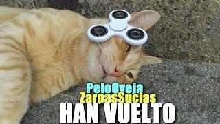 ZarpasSucias APLASTADO POR UN FIDGET SPINNER Y PeloOveja CAZA UNA LAGARTIJA + Regalo Songmics