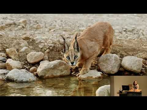 Iran: Crossroads of Wildlife | SOAS University of London