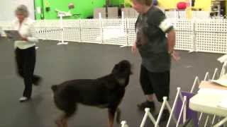 Rottweiler Obedience : Gracie's Akc Utility Dog (ud) Title Q