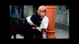 Счастье на поводке детский фильм о собаке