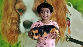 Toy Talk Show about Dogs || Interesting Facts on Dogs