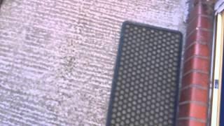 Angry Wasp Attacks