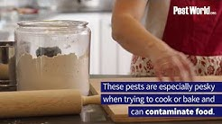 Keep Pantry Pests Out of Your Kitchen