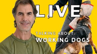 LIVE Talking About Working Dogs  Training and Living with High Drive Dogs
