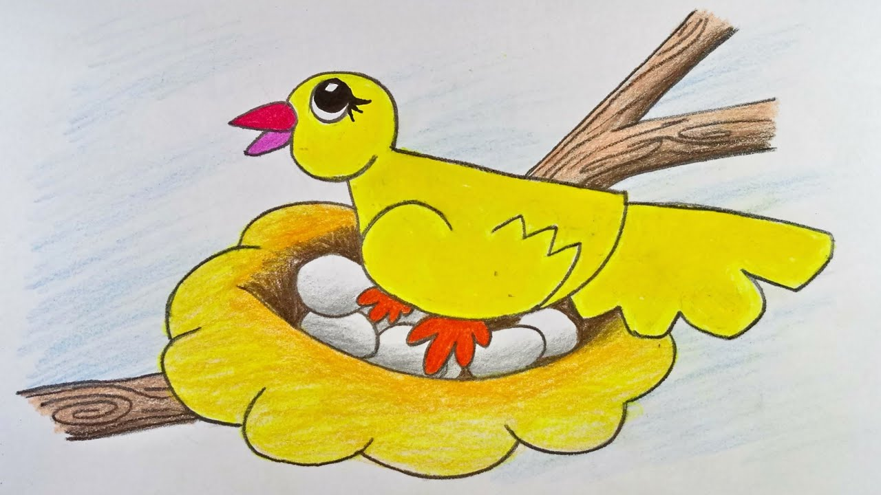 How To Draw Bird And Nest Step By Step With Color For
