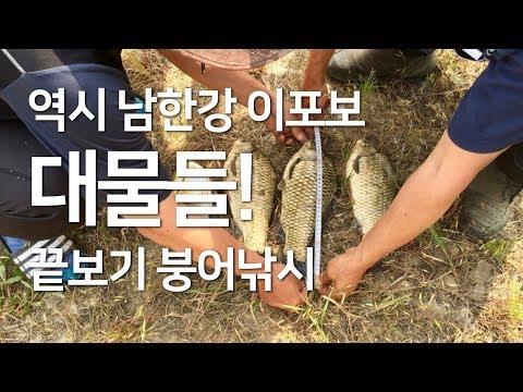 이포보에서 만난 대물붕어들  : 끝보기 민물 �