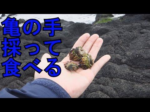 「亀の手採って食べるぞ」 in 八丈島
