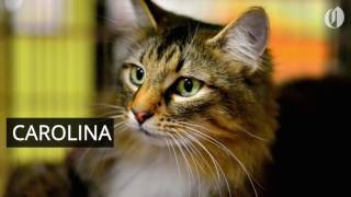 Portland-area pets for adoption March 28 thumbnail