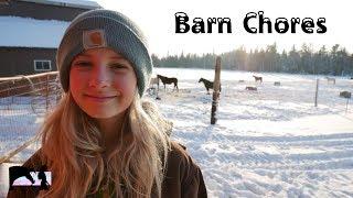 Afternoon Barn Chores   Feeding My Farm Animals   Dani The Horse Girl