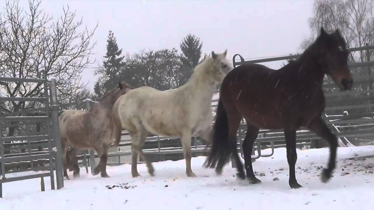 unsere pferde auf der bienwaldranch pferde im schnee youtube. Black Bedroom Furniture Sets. Home Design Ideas