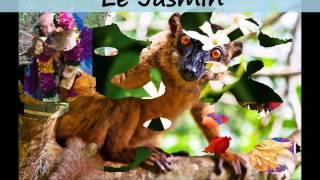 Partez à la découverte de l'île de Mayotte