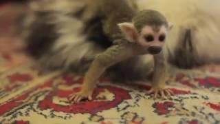 Кошка приняла брошенного детёныша обезьяны