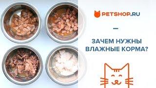 видео Корм для кошек
