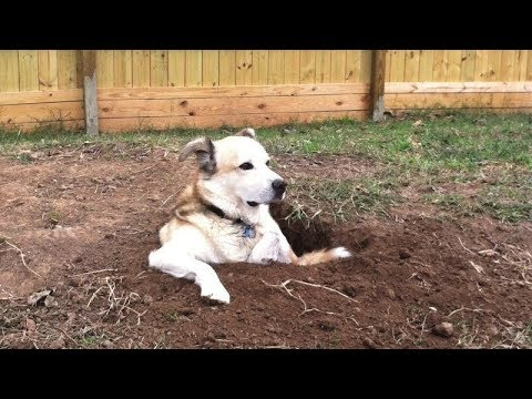 The LONGER YOU WATCH, the FUNNIER IT GETS! - Funny DOG VIDEOS
