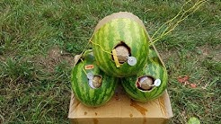 TONY'S GROUND BOMB STUFFED WATERMELONS - HELL YEAH