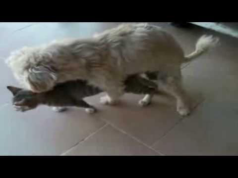 Dog having Sex with Cat 2