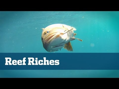 Florida Sport Fishing TV Reef Fishing; How To Reef Fish