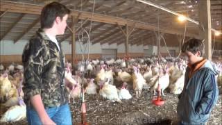 A Look Inside the Barn of Minnesota's Presidential Turkey Flock 2013