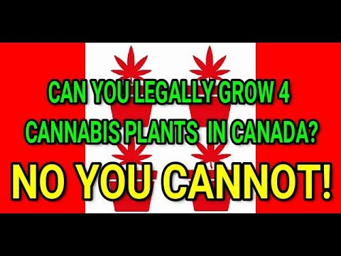 Can You Legally Grow 4 Cannabis Plants In Canada?