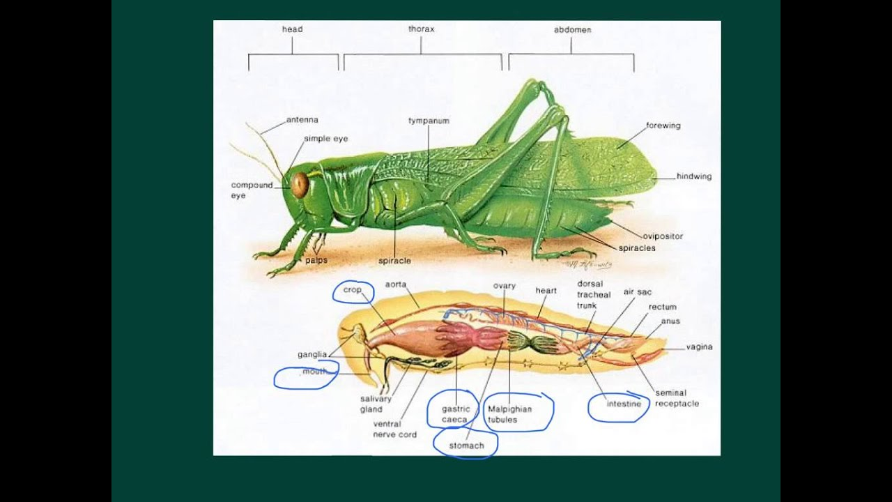 Grasshopper lecture flipped lesson 2 youtube grasshopper lecture flipped lesson 2 ccuart Image collections