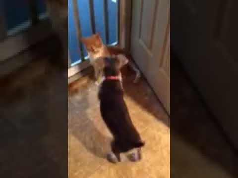 DOG VS CAT part 2