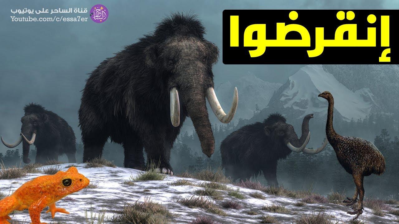عشر حيوانات انقرضت عبر التاريخ ! حيوانات نحمد الله انها انقرضت ?