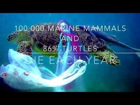 Ocean Plastic Pollution PHC3302