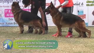 kci dog show in kolkata 2018 II part 2 II Animal Colony