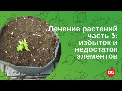 видео: №45 Лечение растений. Часть 3: избыток и дефицит элементов