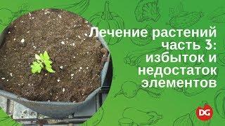 45 Лечение растений. Часть 3: избыток и дефицит элементов