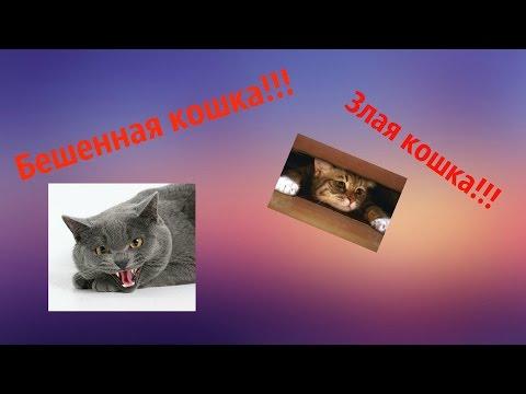 смешные стихи про котов - кошек не любить не льзя!!!