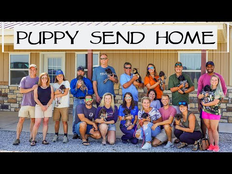 Puppy Send Home Day - 8 Week Old Puppies from YouTube · Duration:  8 minutes 4 seconds