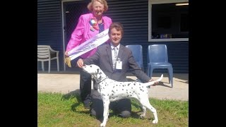 Adstaff Robert Schaible Wins Best Baby Puppy in Show!