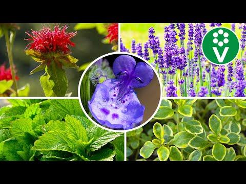 ТОП-10 полезных растений для сада