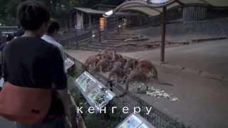 Я посетила в Тама зоопарк, где можно посмотреть что животные свободно живут.