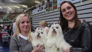 VII międzynarodowa wystawa psów rasowych
