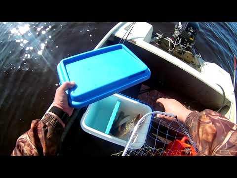 Лодка Неман 2, троллинг щуки в августе