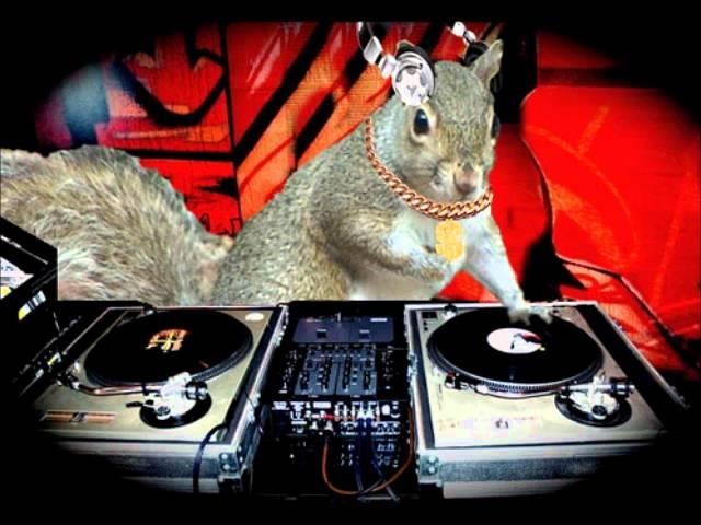 Bildergebnis für squirrel dj