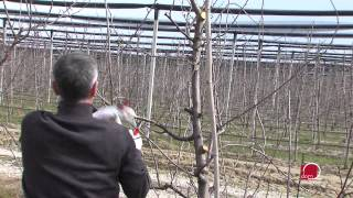 Repeat youtube video Zimsko orezivanje voćaka