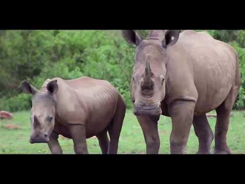 Makweti Safari Lodge Experience 2019