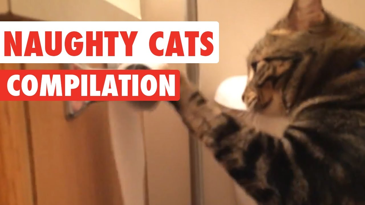 Download Naughty Cats Video Compilation 2016