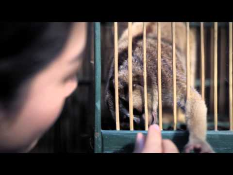 """UNODC """"Wildlife Crime: Don't be part of it!"""" - Bahasa (60 seconds)"""