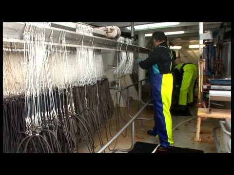 Fisheries Stock Assessment Modelling Video 01 - Meet The Fisherman