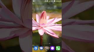 lily live wallpaper screenshot 2
