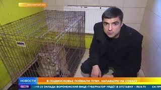 Хозяин пумы, напавшей на домашнюю собаку под Москвой, отдыхает за границей