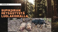 PTA - Päivä 1: Supikoiran metsästystä luolakoiralla   2019-2020